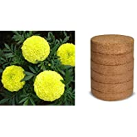 Kraft Seeds Garden Mix of Gainda/African Marigold Flower (Height 30-40 cm, Multicolour, 1000 Pieces) & Coco peat/Agro peat Use for Fast Germinating Flower Seeds and Vegetable Seeds 100g (Multic Combo