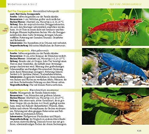 Aquarienfische von A bis Z: Über 300 beliebte Süßwasserfische. Mit schönen Kleinstfischen fürs Nano. (GU Der große GU Kompass) -