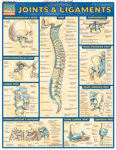 Joints and Ligaments: Reference Guides (Quick Study Academic)