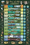 Eras of Life Geology Educational Science Chart Poster by Poster Revolution