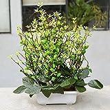 Gifts & Decor Indoor Plants