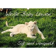 Weiße Baby Löwen - Süß und verspielt (Wandkalender 2016 DIN A3 quer): Erleben Sie faszinierende Fotoaufnahmen von seltenen weißen Babylöwen. (Monatskalender, 14 Seiten ) (CALVENDO Tiere)