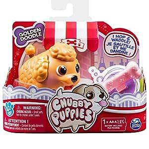 chubby puppies Chiots joufflus seul paquet Golden Doodle d'or Doodle