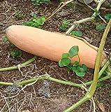 GEOPONICS OLD & RARE * Heirloom 'BlackPink' di pomodoro * 50 + semi * 3 lbs * 80 giorni