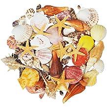 Jangostor 100PCS conchas de mar marinas de playa de océano mixto,Varios tamaños Conchas marinas