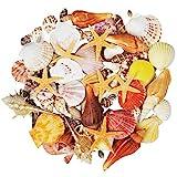 Jangostor 100PCS Muscheln Gemischt Ozean Strand Muscheln Seestern Perfekt für Vase Füllstoffe,Strand Thema Party Hochzeit Dekor,DIY Kunsthandwerk,Fisch Panzer,Kerze Herstellung