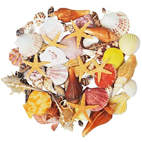 Jangostor 100PCS conchas mar marinas playa océano