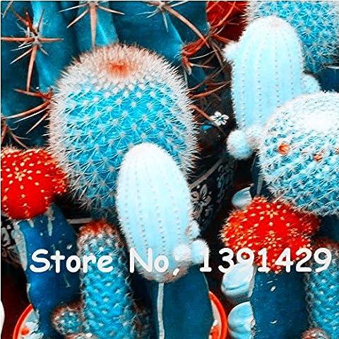 Große Förderung! 50pcs / Packung Schöne Seltene Blumensamen * Kaktus Sukkulenten Samen kaktus lithops Hybrid Bonsai