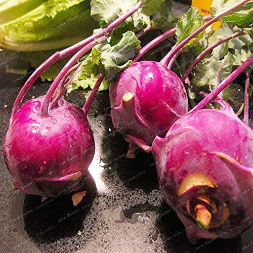 Bloom Green Co. 100Pcs Kohlrabi Bonsai Brassica oleracea Kälteresistente Bio-Frischgemüse Bonsai DIY Bonsai Pflanze Hausgarten: 2