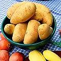 Gärtner Pötschke Kartoffel Cilena, 2,5 kg von Gärtner Pötschke auf Du und dein Garten
