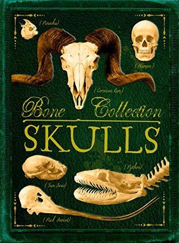 Bone Collection: Skulls by Camilla de la B??doy??re (2014-08-26)