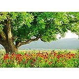 Fototapete WALD Vlies PREMIUM PLUS 300x210 cm Wand Foto Tapete Wand Bild Vliestapete - A BEAUTIFUL TREE - Natur Mohn Feld Baum Wald Bäume rot grün Idyll - no. 090