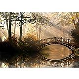 Vlies Fototapete PREMIUM PLUS Wand Foto Tapete Wand Bild Vliestapete - Wald Wasser Bäume - no. 264 Wald Wasser Bäume Herbst Natur Sonne, Größe:350x245cm Vlies