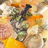 Jangostor 100PCS Muscheln Gemischt Ozean Strand Muscheln Seestern Perfekt für Vase Füllstoffe,Strand Thema Party Hochzeit Dekor,DIY Kunsthandwerk,Fisch Panzer,Kerze Herstellung - 6