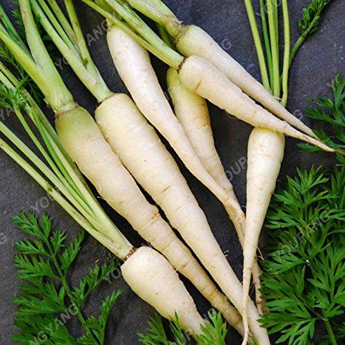 100pcs / sac carotte Graines Heirloom Bio Graines Légumes Fruit très Graines long ginseng carotte Plante en pot pour jardin kaki foncé