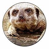 Cheeky Meerkat Kühlschrankmagnet TierstrumpffüllerGeschenk
