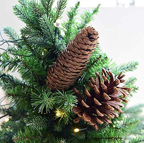 Banbo yohi decorazioni per alberi di natale con coni di pino lungo decorazioni per la casa/puntelli per riprese/fiori secchi naturali 5 pezzi (10-14cm)