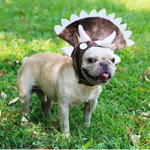 Fighrh Haustier Kopfbedeckung Bulldog Cosplay Hut Hund Halloween Triceratops Dinosaurier Cap Pet Transform Dekoration Halloween Lustiger Hut (M Braun