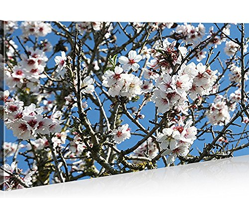 Quadro moderno Almendro en flor Mallorca Impresión sobre lienzo–Quadro X sillones salón cocina muebles oficina casa–Fotográfica Tamaño XXL cuadros