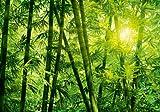 Fototapete - BAMBOO - Bambus Dschungel Blätter Natur Sonne - 8-teilig - Größe 366 x 254 cm - Motivtapete Postertapete Wandbild Bildtapete Wall Mural - Klebeanleitung enthalten - deutsches Qualitätsprodukt – XXL Ansicht verfügbar (Nr97110)