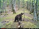 MINOX DTC 1100 Wildkamera und Beobachtungskamera - 5