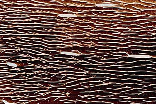 645079-carpenter-ant-back-a4-photo-poster-print-10x8
