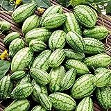 Qulista Samenhaus - Raritäten Mexikanische Mini-Gurke 'Sperli´s Sandia' Mexikanische Mini-Gurke 'Sperli´s Sandia' Obst Saatgut mehrjährig winterhart für Topf/Hochbeet/Gewächshaus