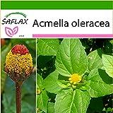 SAFLAX - Kräuter - Parakresse - 500 Samen - Mit Substrat - Acmella oleracea