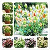 Go Garden 100 pc/sacchetto Coniglio Tail semi di erba Bonsai Giardino ornamentale Pianta in vaso di fiori