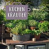 Küchenkräuter Set - Für passionierten Köche, Schleckermäuler und kulinarischen Weltenbummler - 14 ausgewählte Küchen-Kräuterpflanzen