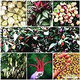 Der Perfekte Chili Garten *Chili Samen Sortiment mit 10 Sorten* by Samenchilishop