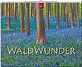 WaldWunder - Im Reich der grünen Giganten: Original Stürtz-Kalender 2020 - Großformat-Kalender 60 x 48 cm -