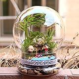 Bluelover Birne Geformten Diy Moss Micro Landschaft Glas Flasche Sukkulente Pflanzen Vase Home Dekoration
