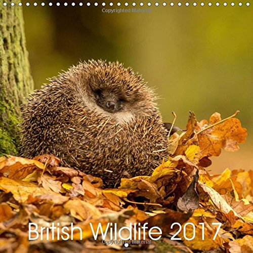british-wildlife-2017-2017-collection-of-animal-photos