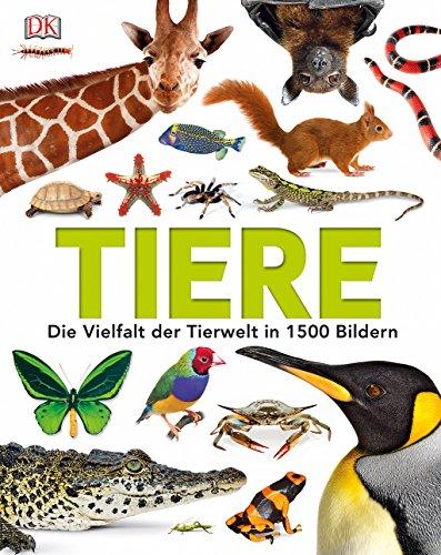Kinder Tierlexikon Bestseller