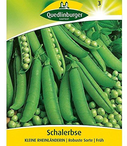 Schalerbse 'Kleine Rheinländerin', 1 Tüte Samen