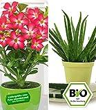 BALDUR-Garten BIO-Aloe vera & Wüstenrose rot, 2 Pflanzen