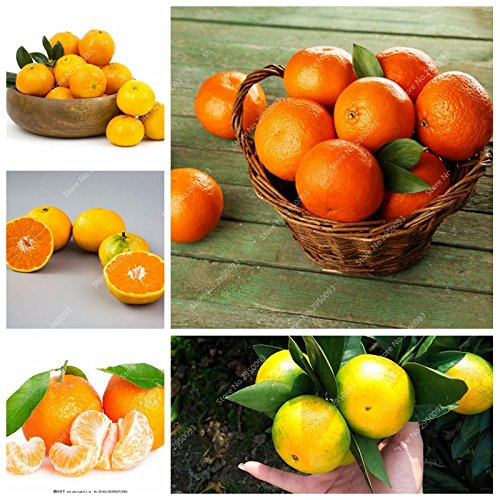 20pcs / sac d'escalade Graines d'Orange Mini-NO comestible OGM Bonsai Fruit Kumquat Mandarine en pot Plantons pour décor de jardin