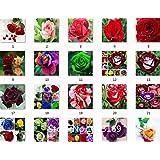 Los verdaderos raras Semillas Negro Rose de sangre, rara increíblemente hermoso Negro rojo de las rosas borde de plántulas de semillas 200 pedazos / porción Bonsai Jardín Pla