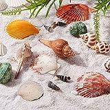 Pandahall Elite ca. 367 g/Karton Shell Perlen natürlichen Seashell Charms für Anhänger DIY Handwerk Machen Home Party Dekoration, natürliche Farbe, gemischten Stil - 4