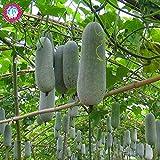 Shopmeeko 50 Piezas de Coliflor Nevado Color Raro Brã³Coli No-OGM Vegetal Orgã¡Nico Planta de Salud Verde para el hogar Jardãn Suministros: 2
