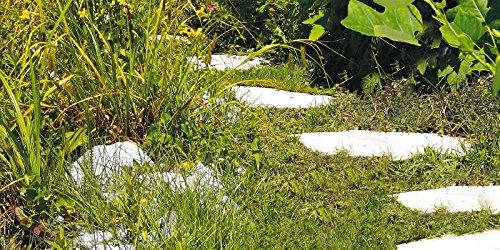 Einhell Akku Gras und Strauchschere GC-CG 3,6 Li WT - 6