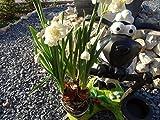 Tourwell Vertrieb Deko Figur Gartenfigur Schaf wetterfest mit Pflanztopf XL Figur Garten Skulptur Gartendeko Gartenfiguren süßes Schaf mit Blumentopf