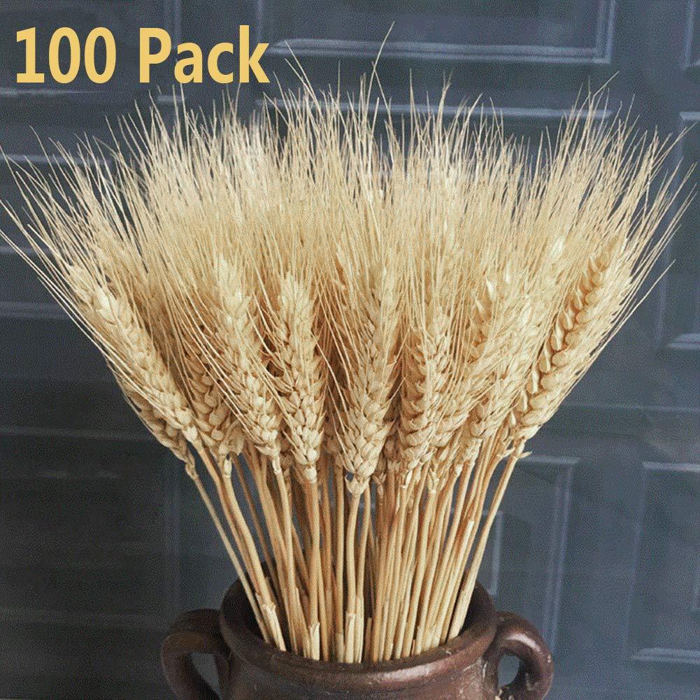 100 x realistas Trigo Artificial Ramo de Flores secas, Ramo de Flores secas decoración, Accesorios de Tiro para Boda…