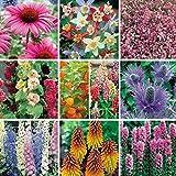 Pack X12 'Mixed Varieties' Garden Perennial Plug Plants Starter Pack