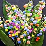 100 Stück Duftend Raritäten Maiglöckchen Blumenzwiebeln Multifarben winterhart mehrjährig Blumensamen Convallaria Samen Bonsai Blumen Samen (nur Samen)