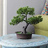 TIED RIBBONS Artificial Bonsai Tree for Home Center Table Shelf Entrance Office Decoration - Artificial Plants for Home…