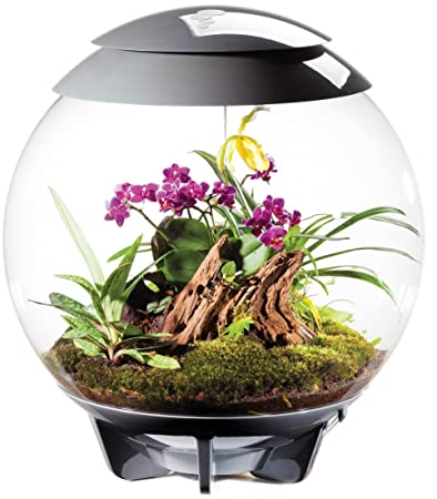 Buy Biorbair Terrarium 16 Gallon Grey Online At Low Prices In