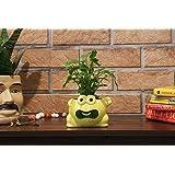 Leafy Tales Ceramic Frog Shape Planter, Multicolor Small Size 1 pc…