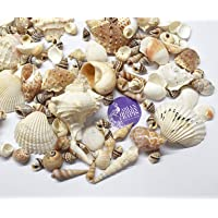 Asian Hobby Crafts Natural Sea Shells : Pack of 480gm : Shape - Assorted